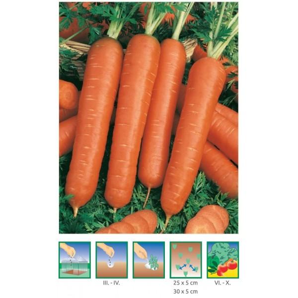 mrkva skorá, karotka – Karotela